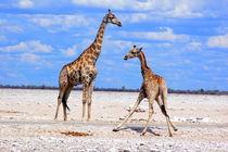 Giraffes at a waterhole in Namibia - Africa by Eddie Scott
