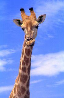 Giraffe im Etoscha-Nationalpark - Namibia by Eddie Scott