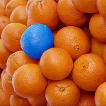 funny splash- Orangen von mehrfarbeimleben