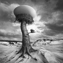 The Nests von Dariusz Klimczak