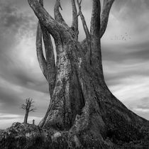 Gigantree von Dariusz Klimczak