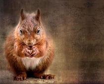 squirrel by Vera Kämpfe