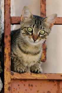 Katzenkind in rostiger Gartentür. Cute kitten on a rusty iron door  von Katho Menden