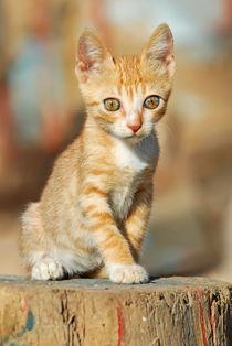 Niedliches Katzenkind. Cute red tabby kitten by Katho Menden