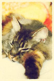 Sleepy Cat von sharandra