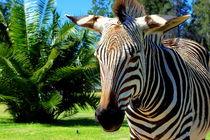 Zebra vor Palmen in Afrika von Eddie Scott