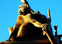 Affen-fotos-afrika-namibia-7