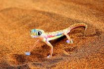 Palmate-Gecko Namib Desert Africa by Eddie Scott