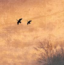 Im Anflug von © Ivonne Wentzler