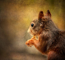 squirrel2 von Vera Kämpfe