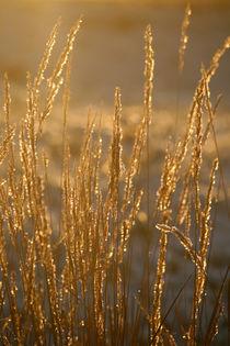Im goldenen Abendlicht von Heidrun Lutz