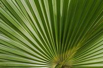 Palmenblatt von Udo Seltmann