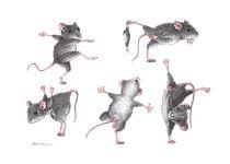 Maus Gymnastik by Stefan Kahlhammer