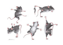Maus-gymnastik-fineart