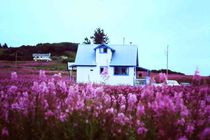 Alaska im Sommer: ein Blumenmeer by Monika Fuchs