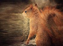 Red Squirrel by Vera Kämpfe