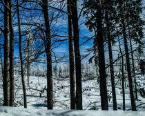Winterwald von detailreich-fotografie
