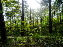 Lichter im Wald by detailreich-fotografie