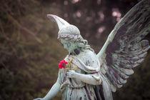 Rosen Engel von Dennis Stracke