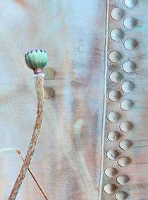 Stahlmohnkapsel by © Ivonne Wentzler