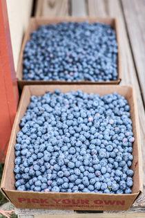 Farm Fresh picked blueberries von Matilde Simas