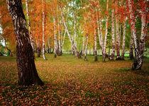 Autumn forest von larisa-koshkina