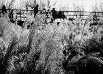 Through the Winter Grasses von Jon Woodhams