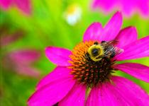 Memphis-botanic-garden-quest-for-butterflies-137-raw-5x7-sfe-l-and-e
