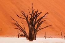 Dead Vlei Camelthorn Trees von Matilde Simas