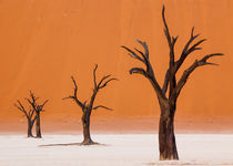 Dancing Trees in Dead Vlei by Matilde Simas