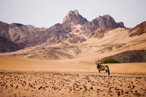 Namibian Angolan Border with Gemsbok von Matilde Simas