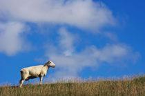 Das Schaf by AD DESIGN Photo + PhotoArt