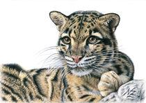 Nebelparder - Clouded Leopard von Nicole Zeug