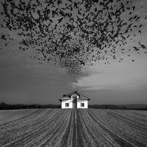 Bad Feelings by Dariusz Klimczak