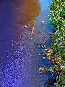 Enten auf Patrouille 2   Landschaftsfotografie by Patrick Jobst
