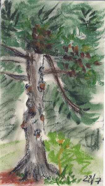 F0012-fir-tree-copy