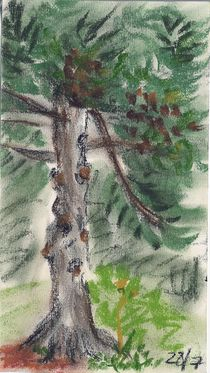Oil Pastel - Pine Tree by Sabine Cox
