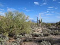 Arizona Desert (7) von Sabine Cox
