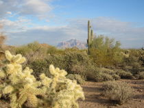 Arizona Desert (6) by Sabine Cox