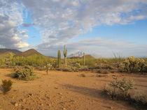 Arizona Desert (5) von Sabine Cox