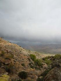 Arizona Desert (3) von Sabine Cox