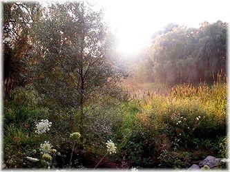 P-fsum001-foggy-summer-morning-copy