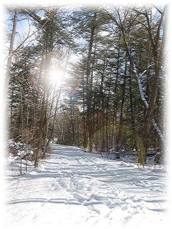 P-sp001-snowy-path1-copy