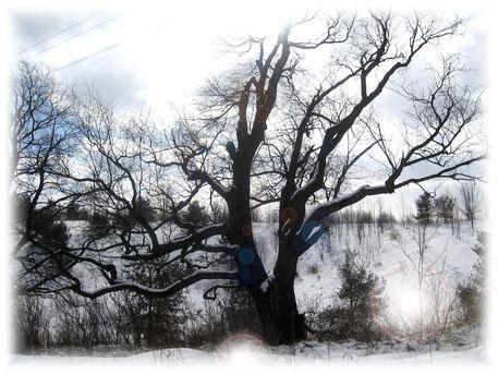 P-tree001-tree1-copy