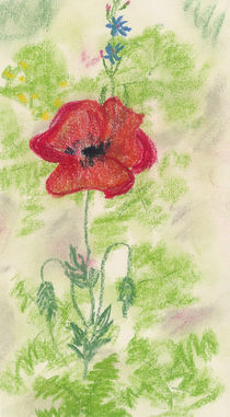 Oil Pastel - Poppy by Sabine Cox