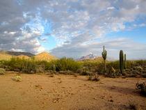 Arizona Desert (1) von Sabine Cox