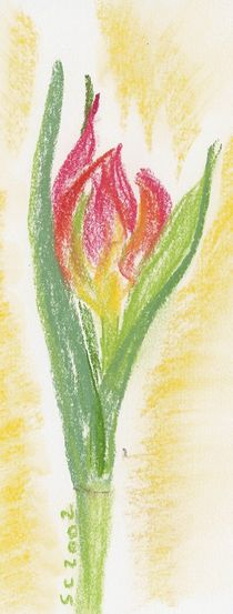 Oil Pastel - Tulip by Sabine Cox