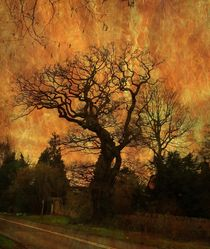The Old Oak. by Heather Goodwin
