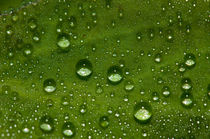 Dew drops by Víctor Suárez