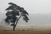 Baum by Gerhard Jörgens